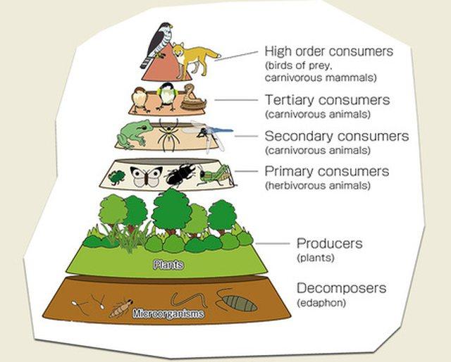 Koronavirus/ Hakmarrje e ekosistemit
