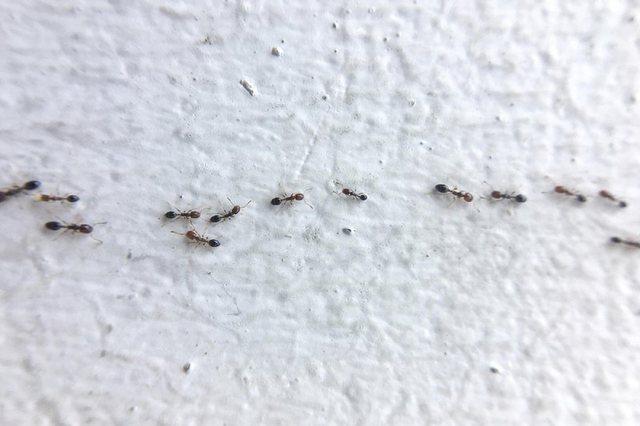 Ja si t'i zhdukni insektet nga kuzhina!