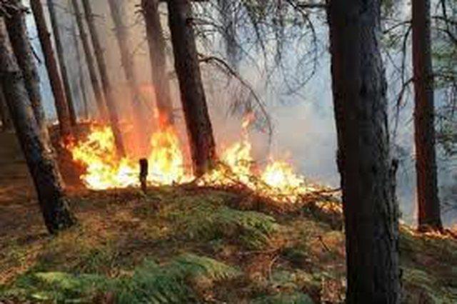 10 vatra zjarri aktive, 200 efektivë të FA në terren!