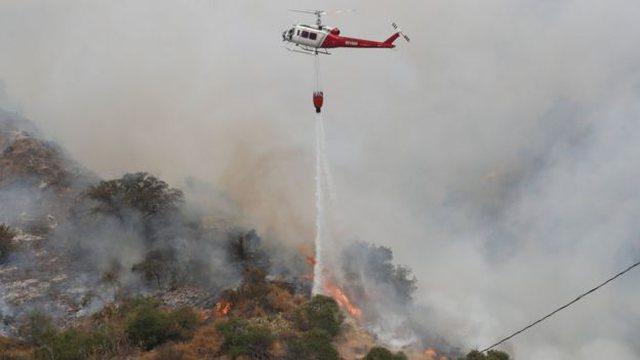 Zjarret në Amerikë/Trump: Faji i menaxhimit të pyjeve