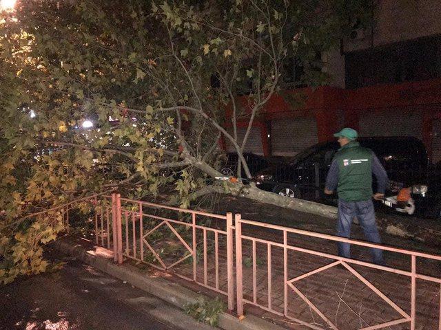 Foto/ Stuhi shiu dhe erë në Tiranë, rrëzohen pemët,