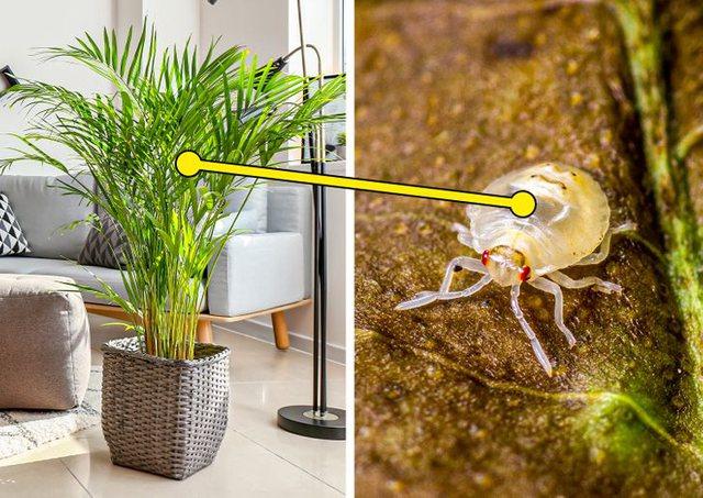 7 bimë që janë të rrezikshme për t'u mbajtur