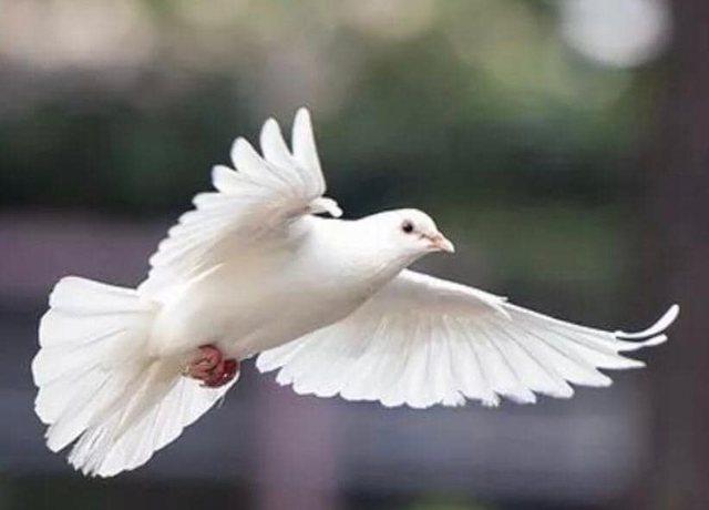 Dita Ndërkombëtare e Paqes/Rama: Shqipëria do të japë