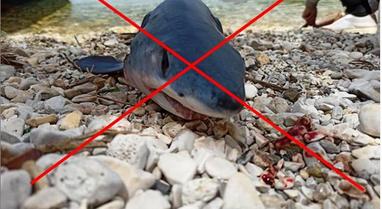 Peshkaqenët në Shqipëri të rrezikuar nga aktiviteti