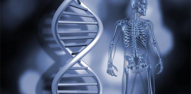Agjërimi për 3 ditë/ Zbuloni si e rigjeneron trupin dhe qelizat