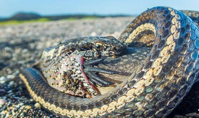 Skifteri u prish intimitetin breshkave/ 10 fotot mahnitëse nga bota e