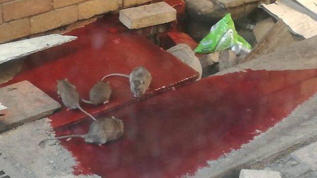 Koronavirusi/ Minj, gjak dhe papastërti alarmante, brenda spitaleve të