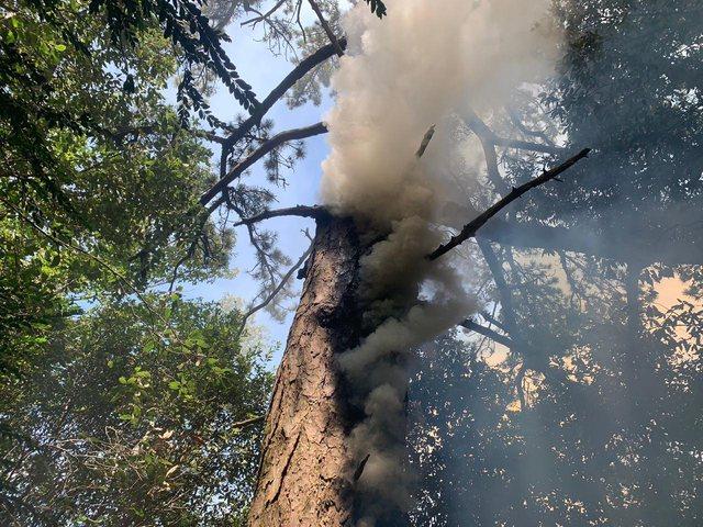Zjarri rrezikon parkun e Llogarasë (FOTO)