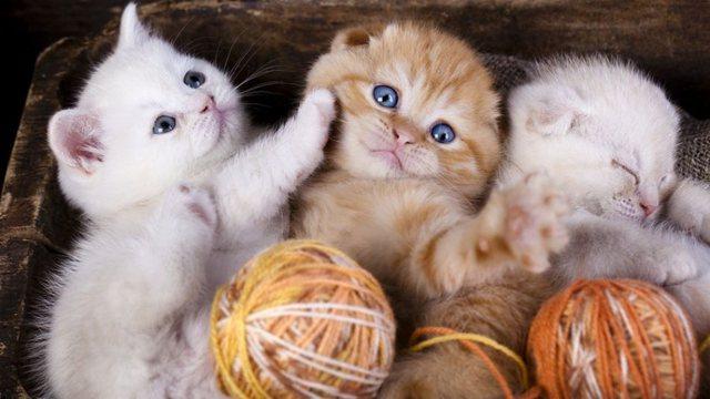 Dita ndërkombëtare e maceve, disa kuriozitete interesante rreth tyre
