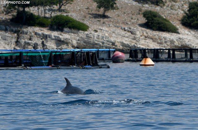 Pamje të mrekullueshme, delfinët shfaqen afër Ksamilit (FOTO)