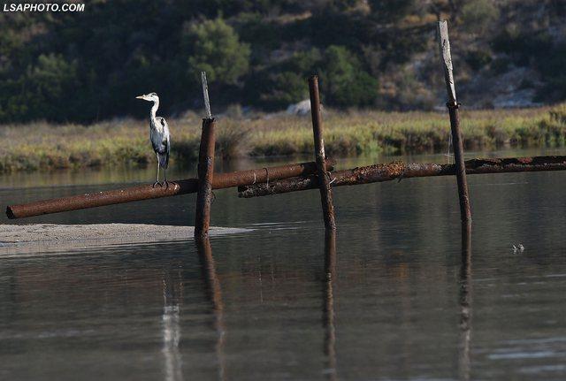 Çafkat pushtojnë kanalin e Vivarit në Butrint (FOTO)
