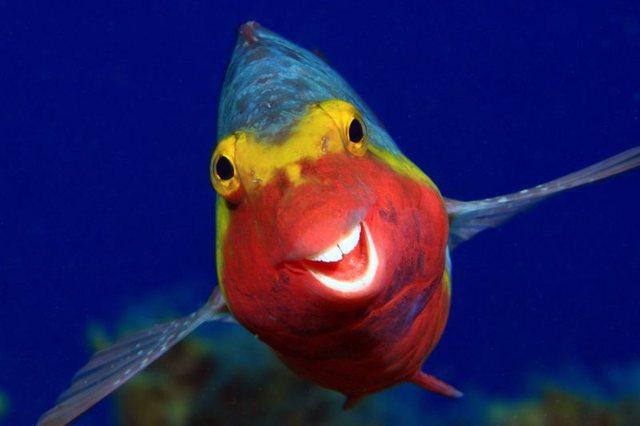 Një peshk që buzëqesh, një breshkë e
