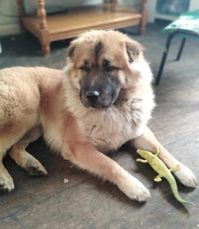 Qeni e kafshoi për vdekje, nëna bën postimin prekës për