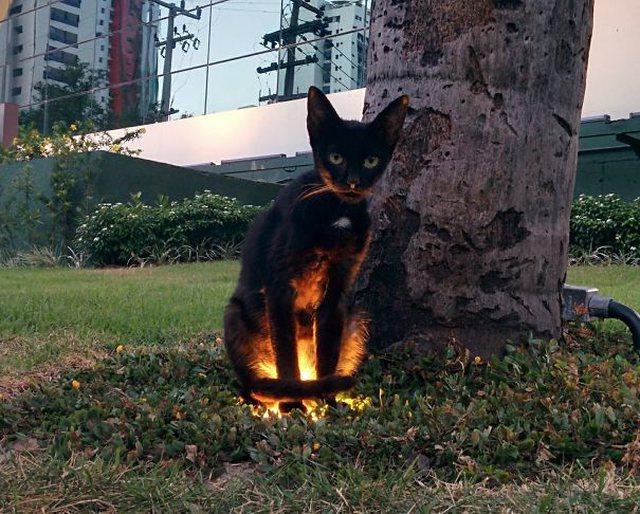 10 fotot e frikshme që tregojnë se macet janë demonë të