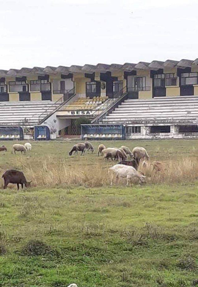 Delet kullosin në fushë, stadiumi i ekipit  shqiptar në gjendje