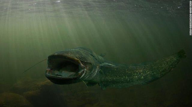 """FOTO/ 'Bisha' e lumenjve, peshku me """"jelek antiplumb"""""""