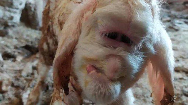 E habitshme/ Delja lind krijesën e çuditshme, pa buzë dhe pa