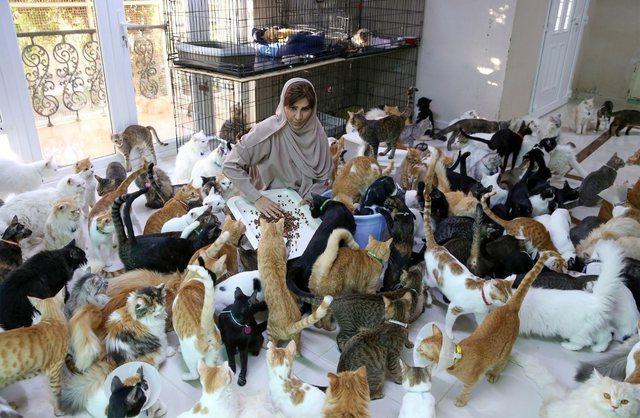 Gruaja me 500 mace e qen: Kafshët janë më besnike se