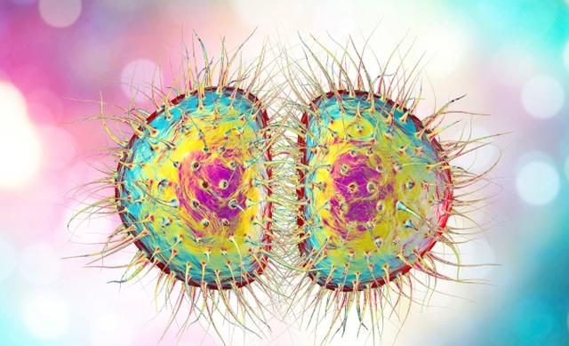 COVID po nxit mutacionin e një tjetër virusi të rrezikshëm,