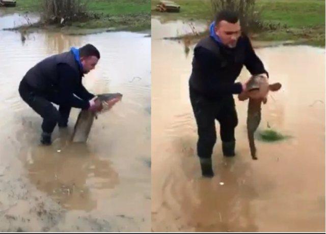 Përmbytjet/ Qytetari kap peshkun gjigand në oborr, pamjet