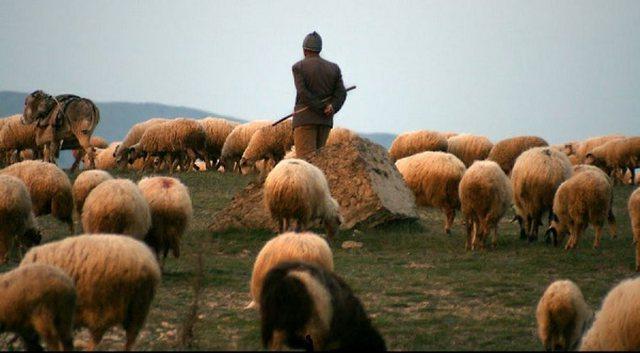 Zjarr në një stan në Finiq, digjen 200 dele