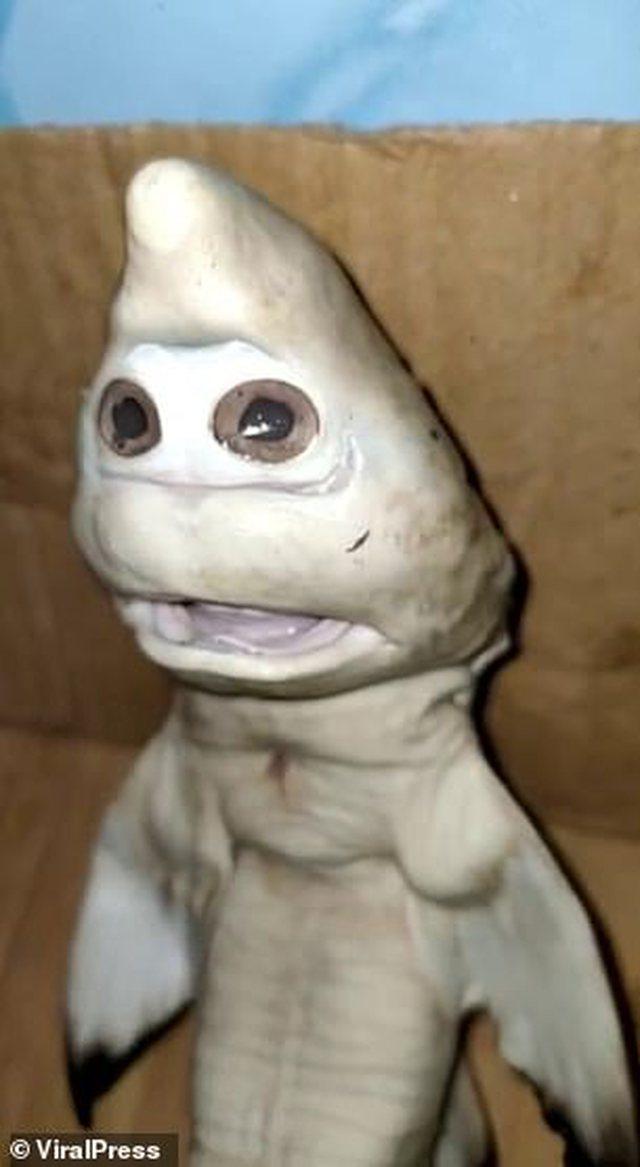 """E pabesueshme/ Peshkatari kap peshkaqenin mutant me """"fytyrë"""