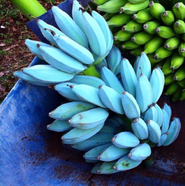 """Fruti i """"çuditshëm"""", banania ngjyrë blu ka shijen e"""