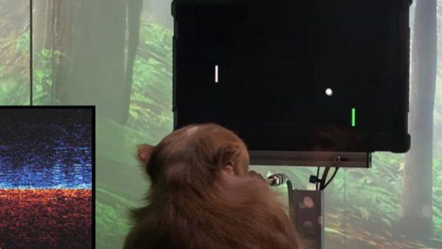 Majmuni luan videolojën duke përdorur mendjen, ëndrra e Elon Musk