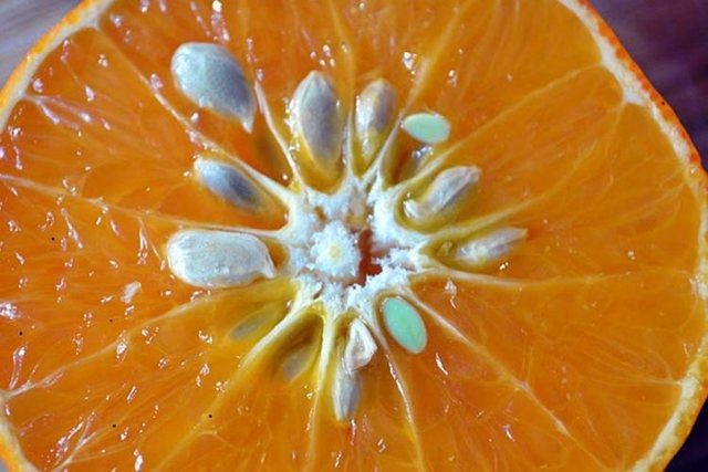 Farat e mandarinave/ Pse çmohen nga mjekësia popullore