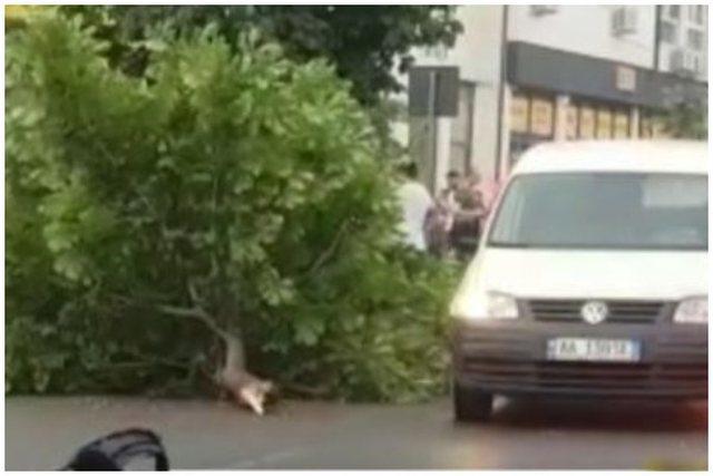 FOTO/ Makina del nga rruga në Tiranë, përplas një vajzë