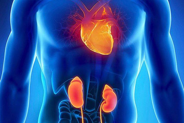 Lidhja mes sëmundjeve të zemrës dhe veshkave, këshillat