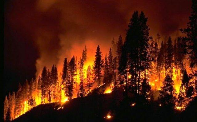Bullgaria përballet me temperatura të larta dhe zjarre