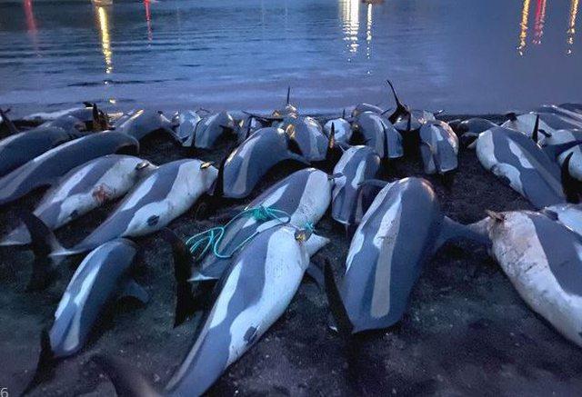 """E tmerrshme! 1.400 delfinë të ngordhur """"pushtojnë"""""""