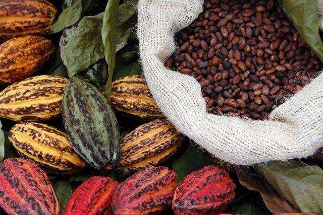 Super kokrrat e kakaos/ Burim i jashtzakonshëm vlerash natyrale
