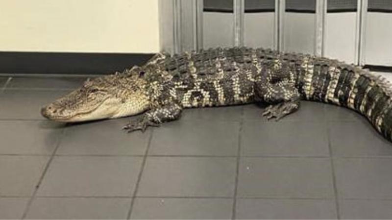 Klienti i pazakontë i një zyre postare në Florida