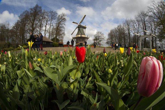 Lehtësohen masat e Covid-19, pranvera në Holandë erdhi me hapjen