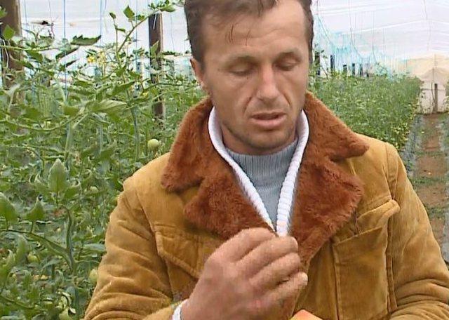 Kthehet nga emigracioni për të mbjellë domate, flet i riu: Duhej