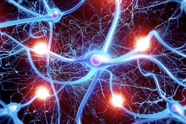 Plakja e trurit/ Njihuni me 5 mënyra si të parandaloni rrezikun