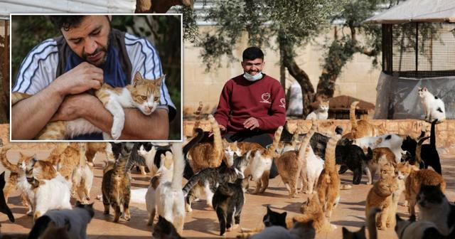 'Njeriu i maceve në Siri', ushqen qindra kafshë të