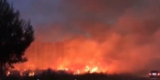 Flakët përpijnë pyjet, vatër e madhe zjarri në