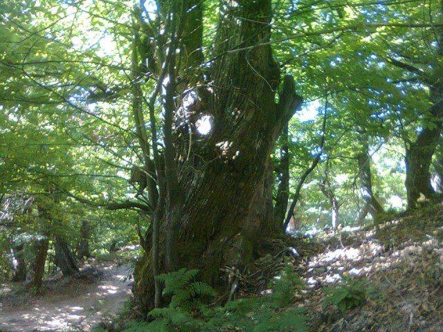 E rëndë në Lushnje, 17 vjeçarja bie nga pema dhe humb