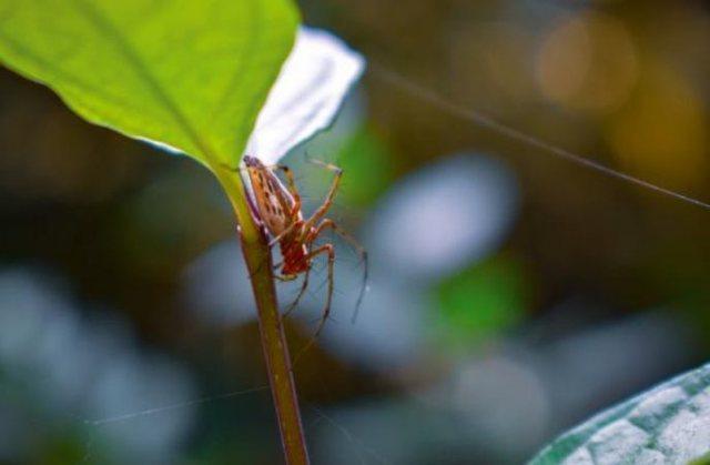 Studimi befasues: Helmi i merimangës riparon dëmet që i shkakton