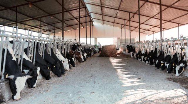 Ja si po pregatiten 1500 fermerë shqiptarë për sfidat e së