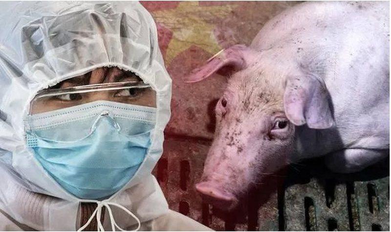 Shënohen rastet e para, virusi i ri i derrit përhapet edhe te