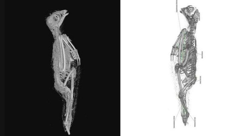 Studimi tregon në 3D se jo vetëm njerëzit, por edhe kafshët