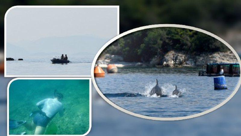Peshkatarë, spektakël delfinësh e zhytës në momente