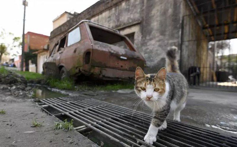 Rusia krijon vaksinën Covid-19 tashmë edhe për macet