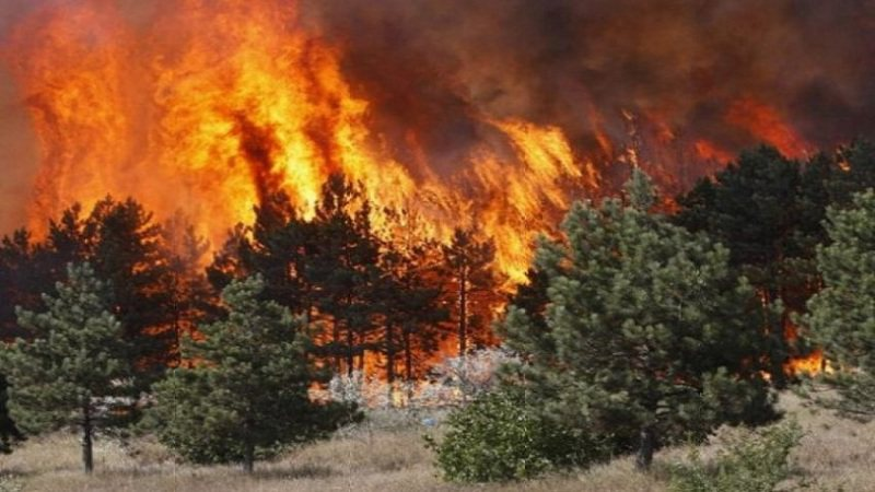 Zjarr masiv në një zonë pyjore në Devoll