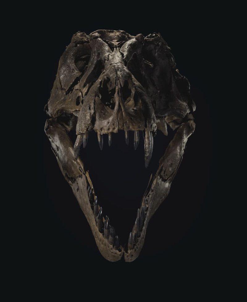Amerikanët tashmë mund të mbajnë 'dinosaur'