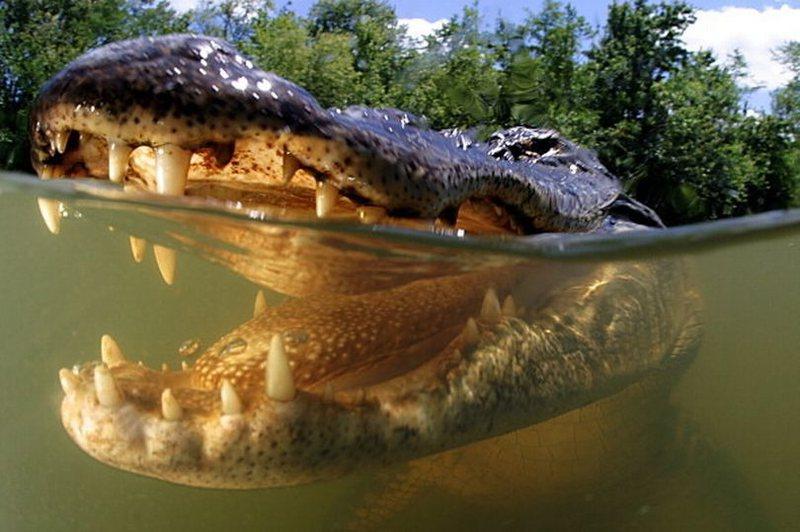 Skena e tmerrit, doktoresha bie në ujërat e mbushur me krokodilë